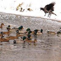 Птичьи переполохи :: Татьяна Ломтева