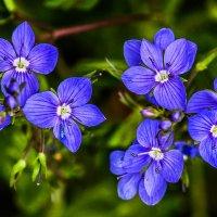 цветочки. :: lev