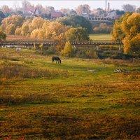 Осеннее утро в Суздали... :: Александр Никитинский