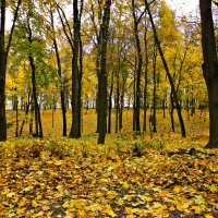 на коре из желтых листьев :: Людмила