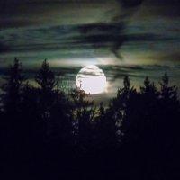 Луна над лесом :: Анатолий Антонов