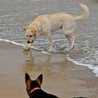 Собаки у моря :: Владимир Брагилевский