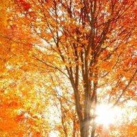 Осень :: Наталья12 Ромашкова