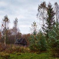 Старый дом :: Михаил Бабаков