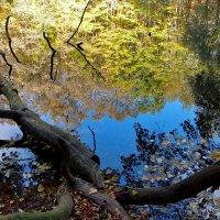 Озеро Холодного Яра. :: Наталья