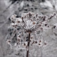 ледяной гербарий :: Natalia Mihailova