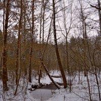 Осенний лес.. :: Vladimir Semenchukov