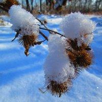 Первый снег ! :: Татьяна ❧