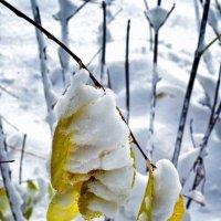 листья..снег.. :: юрий иванов