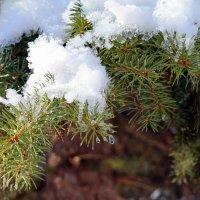 И зимой и летом одним цветом.. :: Андрей Заломленков
