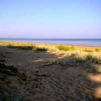 утренний пляж :: linnud