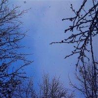 Взгляд на небо, с которого падает снег :: Светлана Лысенко