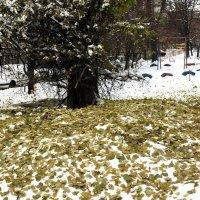 Нежданная зима :: Сергей Рубан