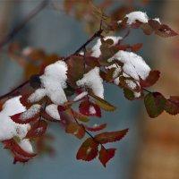 Зима одарила... :: Юрий