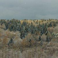 Зимний лес :: Vladislav Gushin