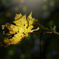 Осеннее солнышко) :: Татьяна Тимофеева