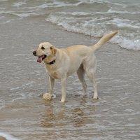 Собака и море :: Владимир Брагилевский
