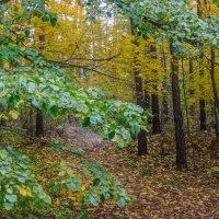 Осень :: Александр Березуцкий (nevant60)