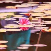 ...там лилии цветут :: Татьяна Ломтева