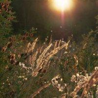 Осенний закат :: Виктория Велес