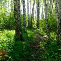 В лесу 4 :: Вячеслав Баширов