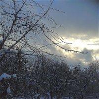 Здравствуйте, я ваша зима! Приехала с Севера.  Буду у вас жить. :: Светлана Лысенко