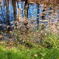 осень в зеркале :: linnud