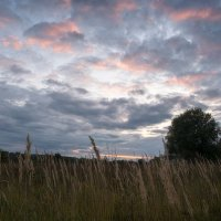 Вечер в травах. :: Андрий Майковский