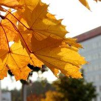 Охристая осень :: Лидия (naum.lidiya)