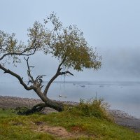 Туманные качели :: Genych