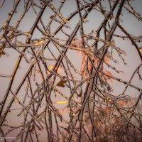 Ледяной дождь :: Наталия Горюнова