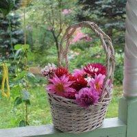 Цветы уходящего лета :: Наталья Березко