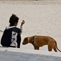 С собакой на пляже :: Владимир Брагилевский