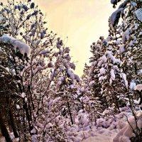 зимнее настроение :: Валерия Воронова