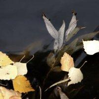 За травами,уснувшими под зиму, мне будет сниться вешняя пора... :: Валерия  Полещикова