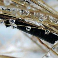 Застывший дождь :: Елена Якушина