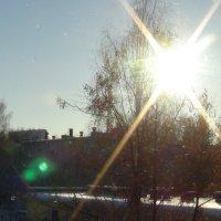 солнце средь деревьев :: константин
