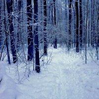 Снежной тропой :: Svetlana27
