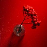 Рябина красная... :: Sergey Apinis