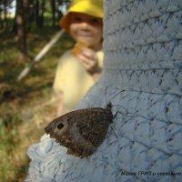 Бабочка :: Юлия Васильева