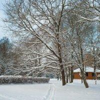 Снежный ноябрь 4 :: Виталий
