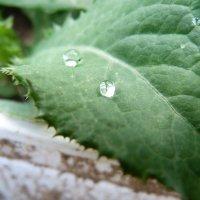 Серебряные росы :: Виктория Ившина