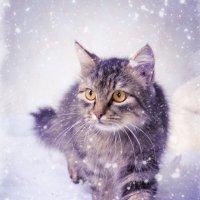 мои котэ :: Галина Данильчева
