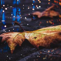Осень :: Виталий Близень