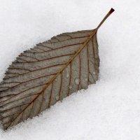 Минимализм снежного ноября... :: Ирина Румянцева