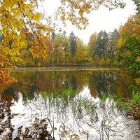 Осень шьет наряды  из разноцветных лоскутков :: Маргарита Батырева