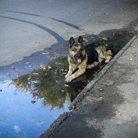 Водные процедуры :: Николай Фролов