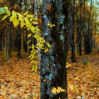 На дереве :: Наталья Копылова