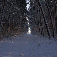 бор...зима... :: Alexandr Staroverov
