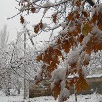 Под снежной тяжестью :: Галина